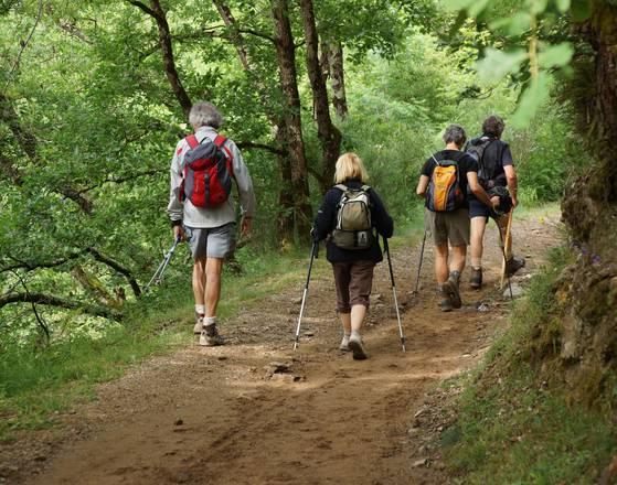 Une randonnée en forêt